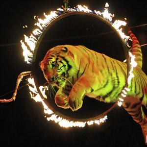 Цирки Агрыза